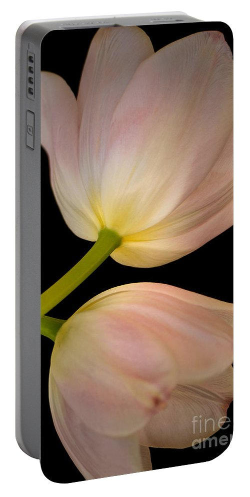 Pastel Pink Tulips Portable Battery Charger featuring the photograph Tu-lamps by Deb Halloran
