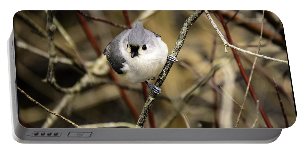 Tufted Titmouse Portable Battery Charger featuring the photograph Tufted Titmouse On The Watch by LeeAnn McLaneGoetz McLaneGoetzStudioLLCcom
