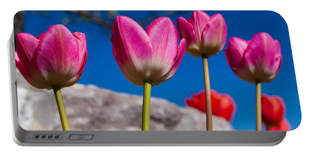 Tulip Revival Portable Battery Charger featuring the photograph Tulip Revival by Chad Dutson