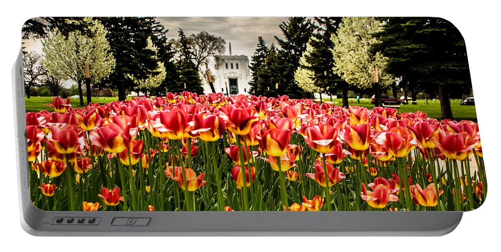Tulip Festival Portable Battery Charger featuring the photograph Tulips And Building by Grace Grogan