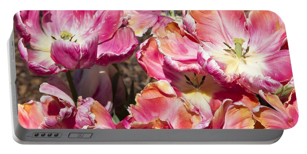 Tulips Portable Battery Charger featuring the photograph Tulips At Dallas Arboretum V58 by Douglas Barnard