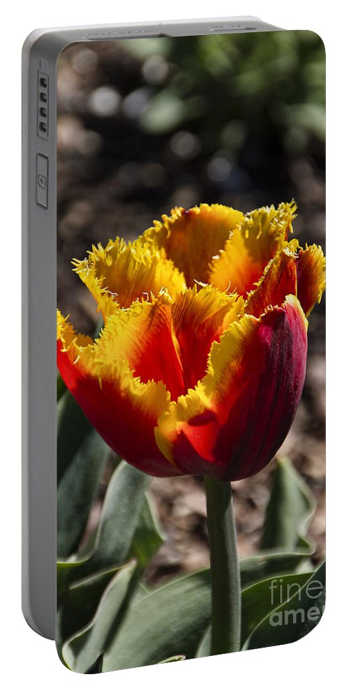 Tulips Portable Battery Charger featuring the photograph Tulips At Dallas Arboretum V73 by Douglas Barnard