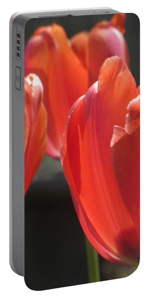 Tulip Portable Battery Charger featuring the photograph Tulips Backlit 5 by Anita Burgermeister
