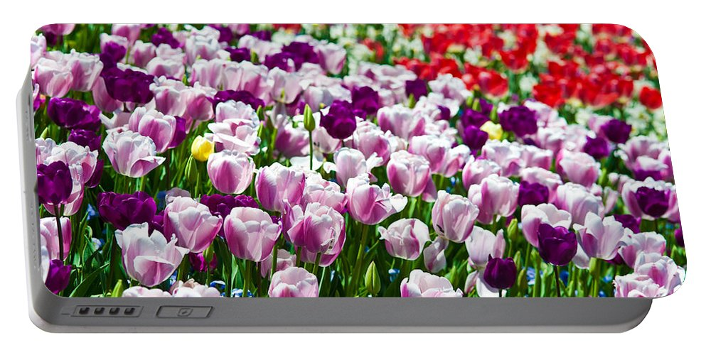 Tulip Portable Battery Charger featuring the photograph Tulips Field by Sebastian Musial