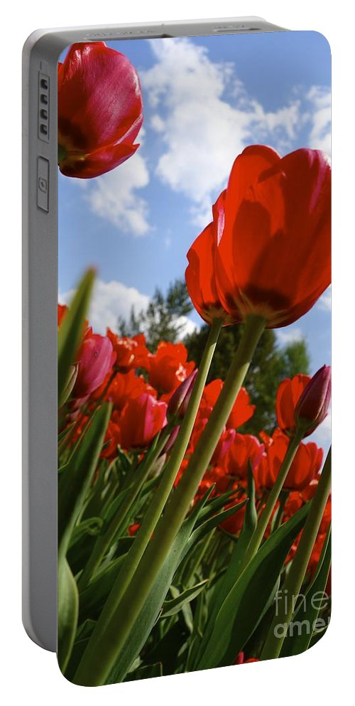 Budding Portable Battery Charger featuring the photograph Tulips Leaning Tall by Jacqueline Athmann