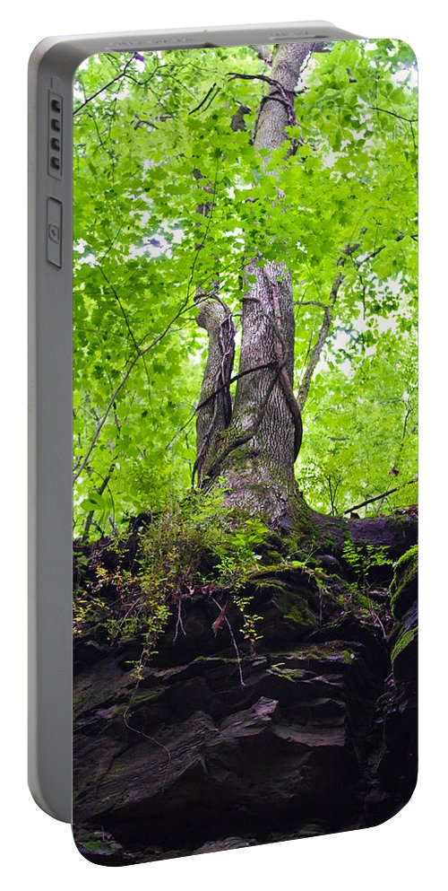 Tree Portable Battery Charger featuring the photograph Tunnel Tree by Nick Kirby