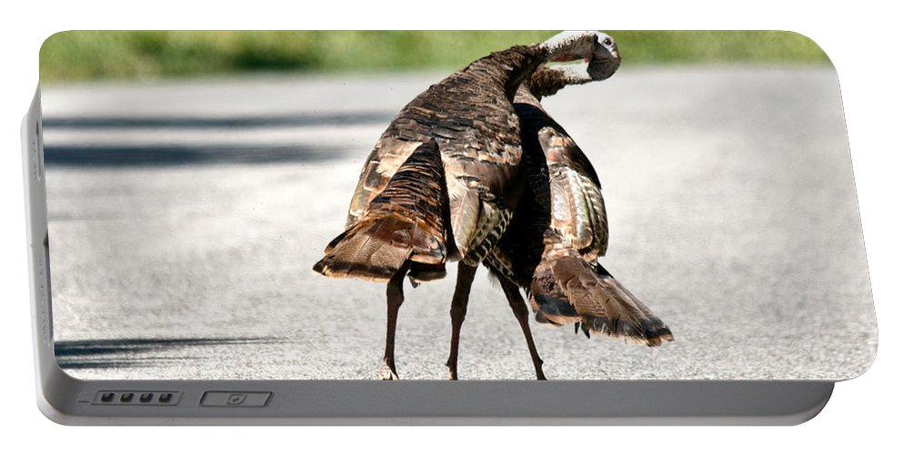 Turkey Portable Battery Charger featuring the photograph Turkey Fight by Cheryl Baxter