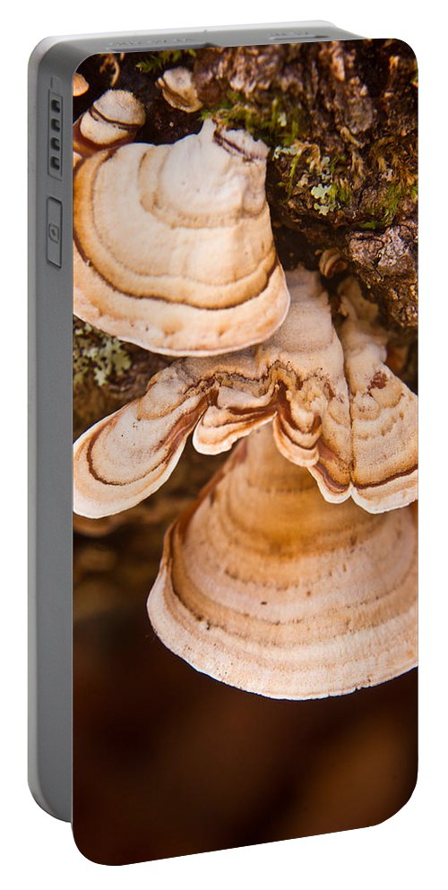 Fungi Portable Battery Charger featuring the photograph Turkey Tail Fungus 5 by Douglas Barnett