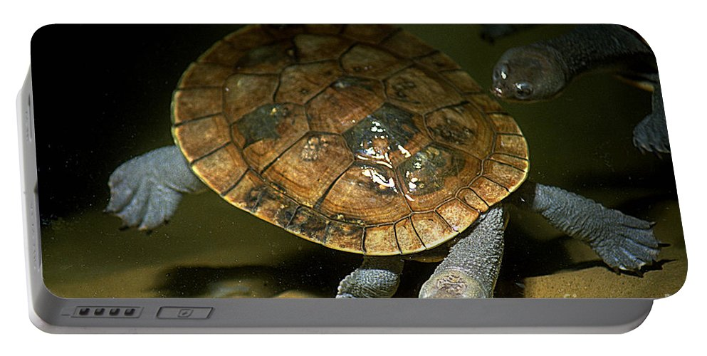 Turtle Portable Battery Charger featuring the photograph Turtles Float by Gary Gingrich Galleries