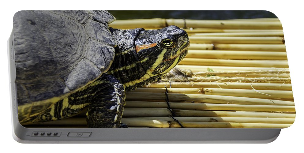 Turtle Portable Battery Charger featuring the photograph Tutle On Raft by LeeAnn McLaneGoetz McLaneGoetzStudioLLCcom
