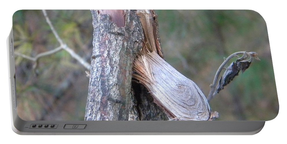 Twig Portable Battery Charger featuring the photograph Twigs 2 by Nathanael Smith