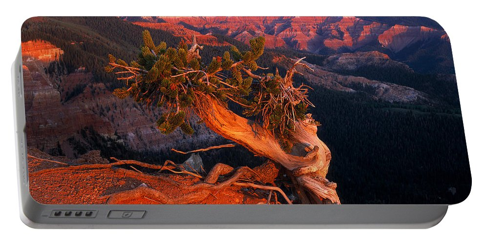 Twisted Forest Portable Battery Charger featuring the photograph Twisted Forest by Leland D Howard