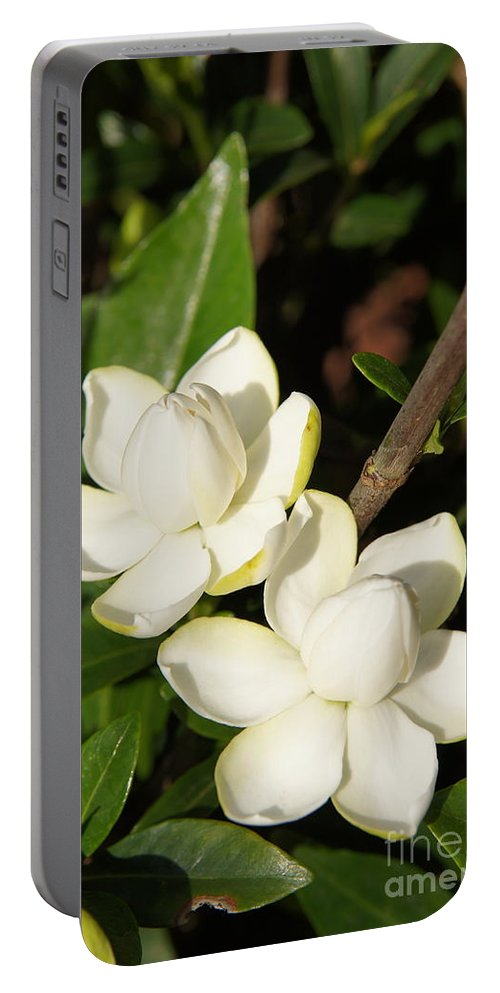Gardenia Portable Battery Charger featuring the photograph Awesome Blossoms by Megan Cohen
