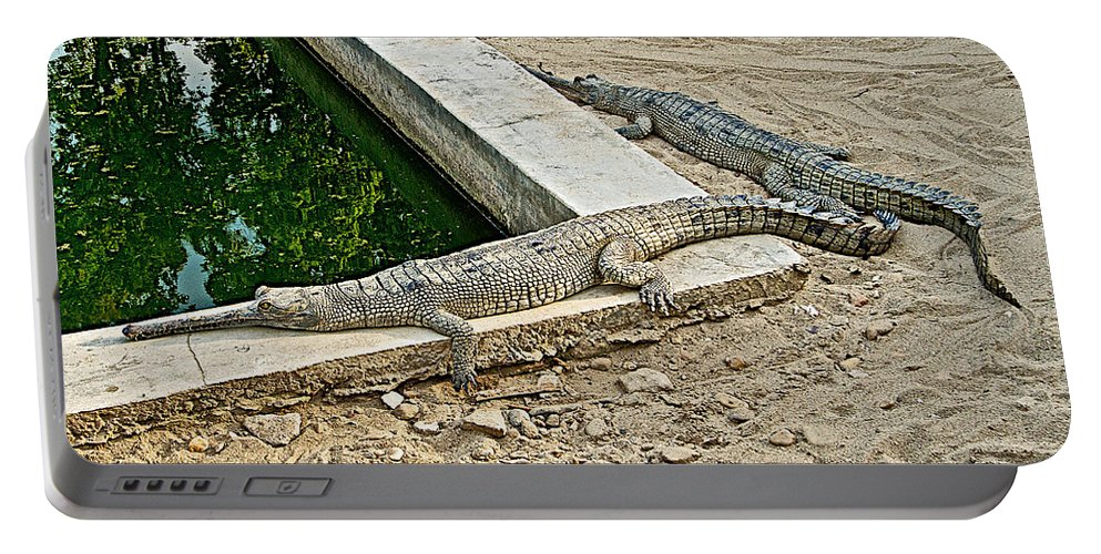 Two Gharial Crocodiles In Gharial Conservation Breeding Center In Chitwan National Park In Nepal Portable Battery Charger featuring the photograph Two Gharial Crocodiles In Gharial Conservation Breeding Center In Chitwan Np-nepal  by Ruth Hager