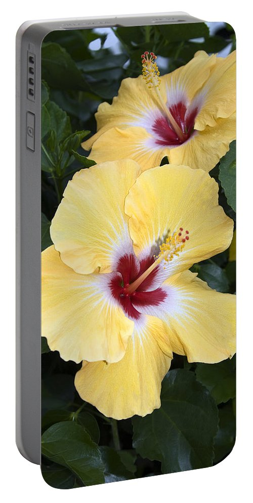 Hibiscus Portable Battery Charger featuring the photograph Two Hibiscus by Sally Weigand