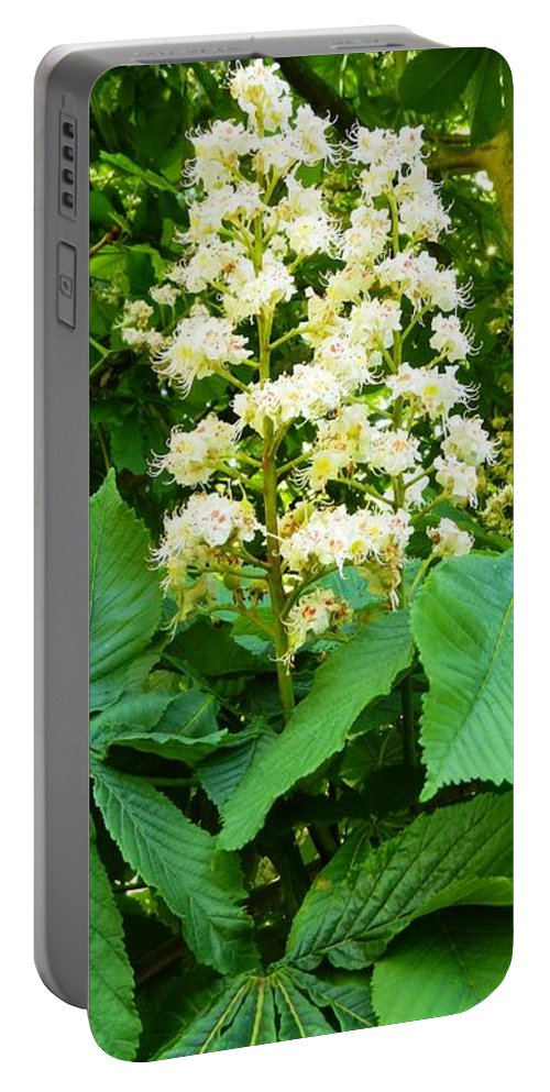 Nature Portable Battery Charger featuring the photograph Two Of Us by Loreta Mickiene