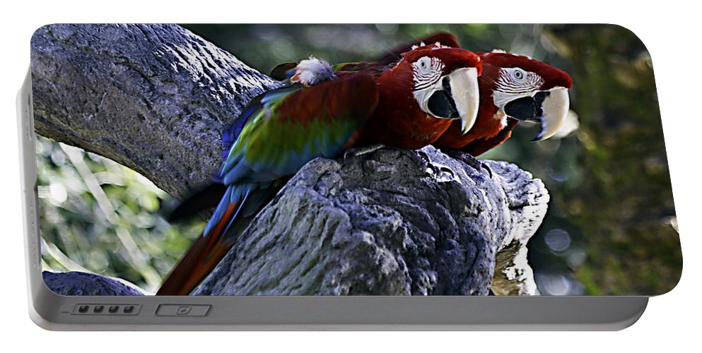 Birds Portable Battery Charger featuring the photograph Two On A Branch by Ken Frischkorn