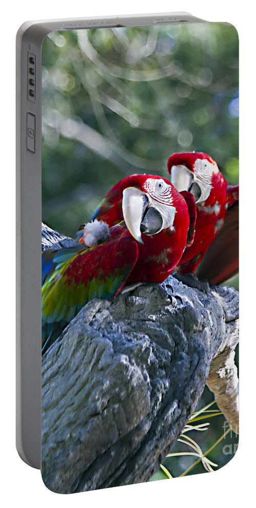 Birds Portable Battery Charger featuring the photograph Two On A Branch Two by Ken Frischkorn