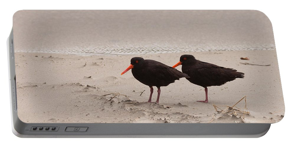 Animal Portable Battery Charger featuring the photograph Two Oystercatchers Haematopus Unicolor On Beach by Stephan Pietzko