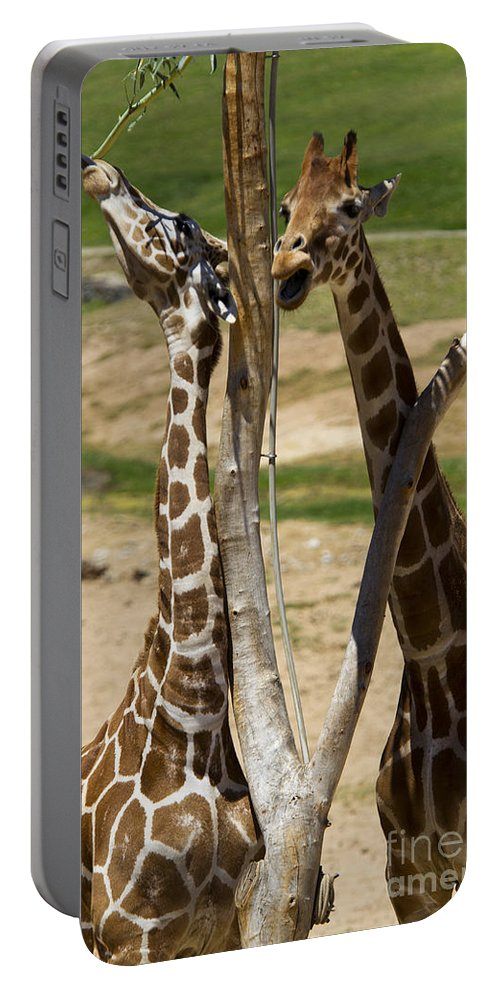 Travel Portable Battery Charger featuring the photograph Two Reticulated Giraffes - Giraffa Camelopardalis by Jason O Watson