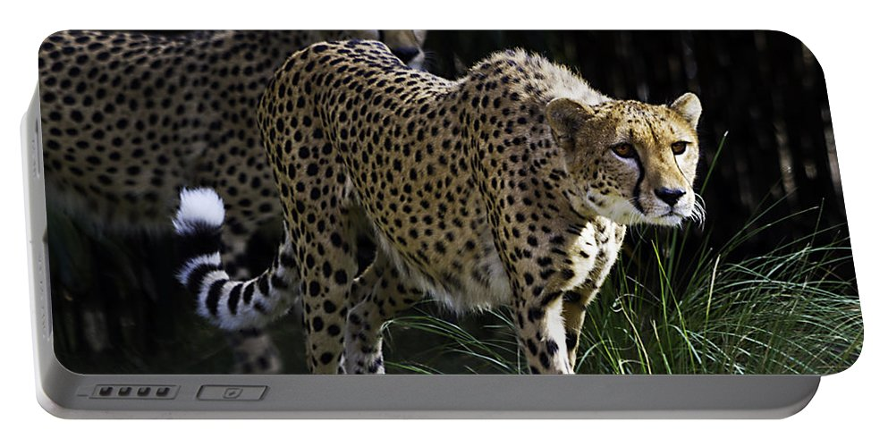 Tigers Portable Battery Charger featuring the photograph Two Sisters by Ken Frischkorn