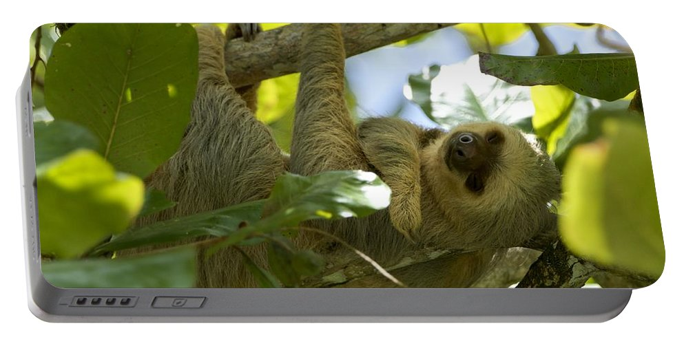 Rainforest Portable Battery Charger featuring the photograph Two-toed Sloth Relaxing With A Grin by Brian Kamprath