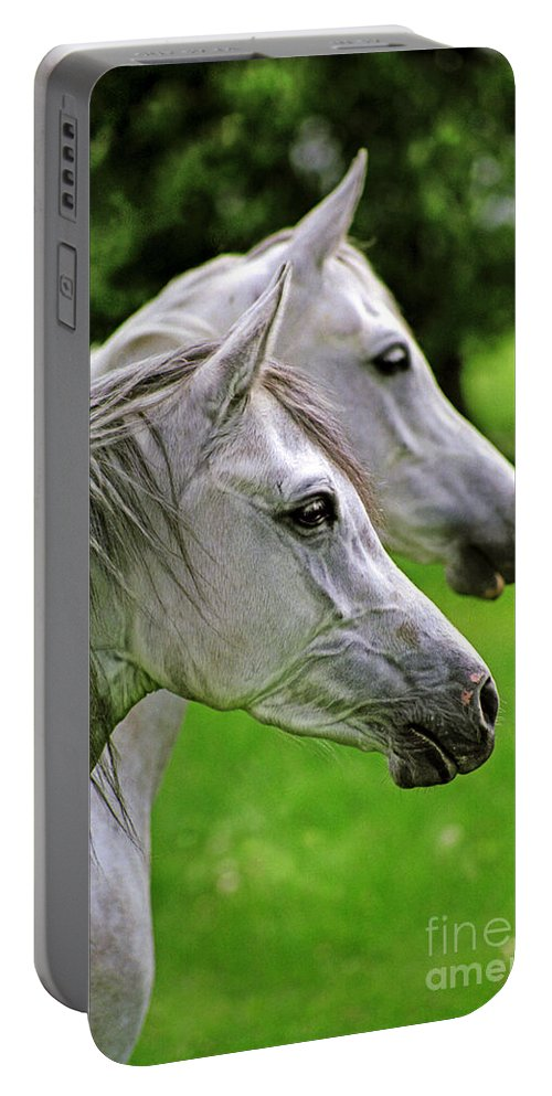 Horse Portable Battery Charger featuring the photograph Two White Arabian Mares by Angel Ciesniarska