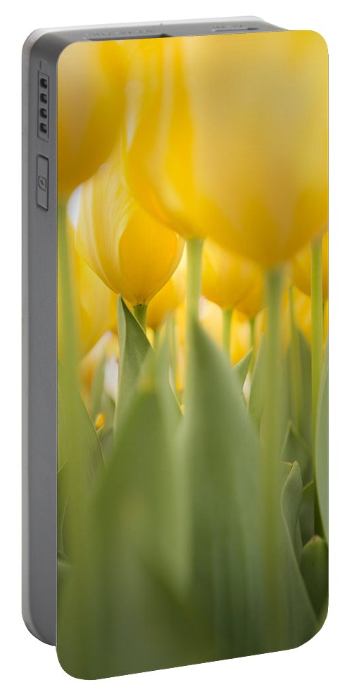 Sunshine Portable Battery Charger featuring the photograph Under Yellow Tulips - 8x10 Format by Lori Grimmett