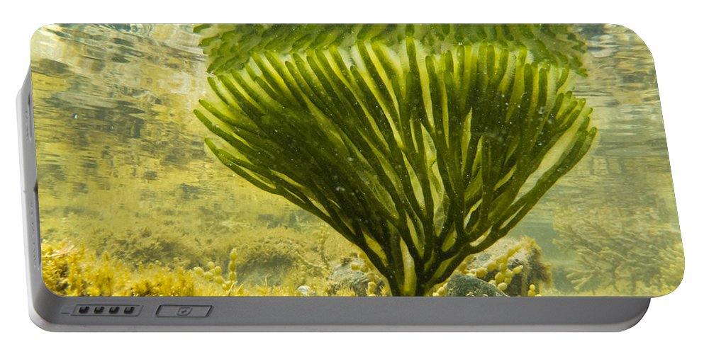 Algae Portable Battery Charger featuring the photograph Underwater Shot Of Seaweed Plant Surface Reflected by Stephan Pietzko