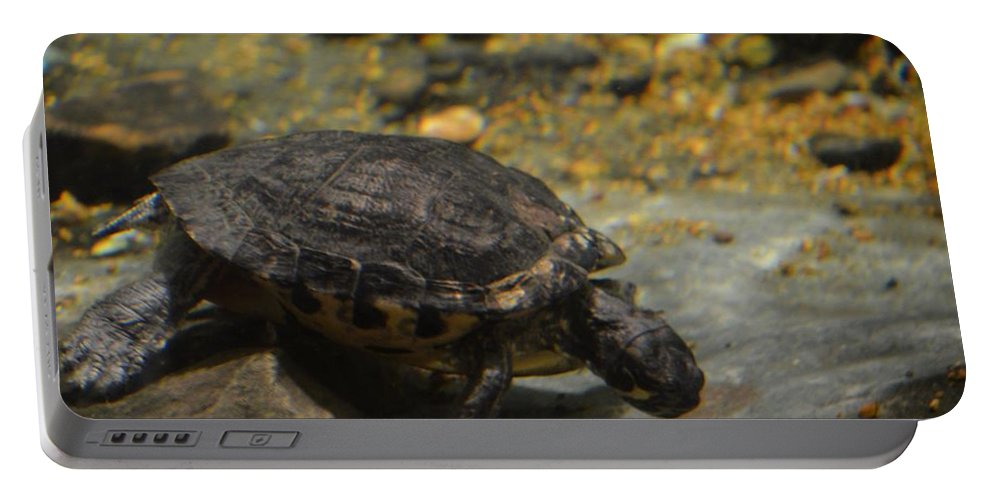 Underwater Turtle Portable Battery Charger featuring the photograph Underwater Turtle by Maria Urso