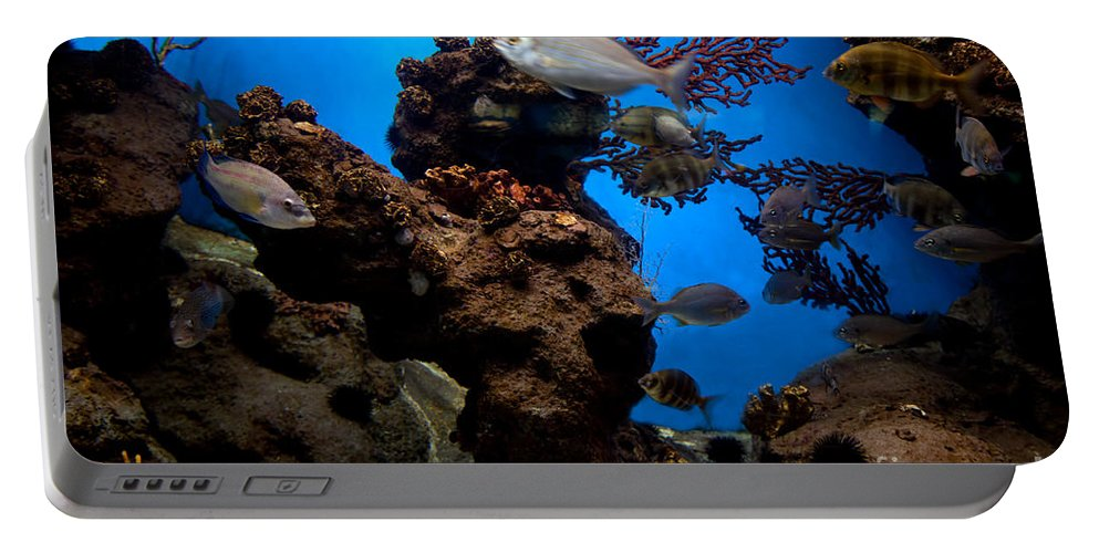 Fish Portable Battery Charger featuring the photograph Underwater View by Michal Bednarek