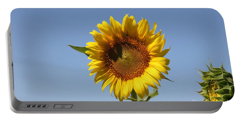 Sunflowers Portable Battery Charger featuring the photograph United Through Challenge by Amanda Barcon