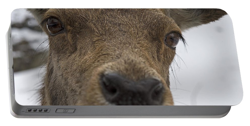 Nina Stavlund Portable Battery Charger featuring the photograph Up Close... by Nina Stavlund