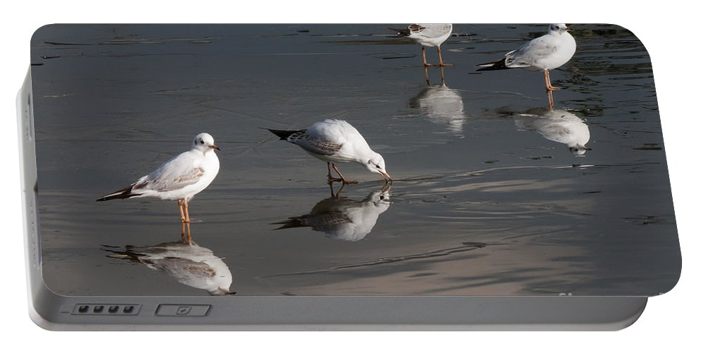 Winter Portable Battery Charger featuring the photograph Upon Reflection by Kathryn Bell