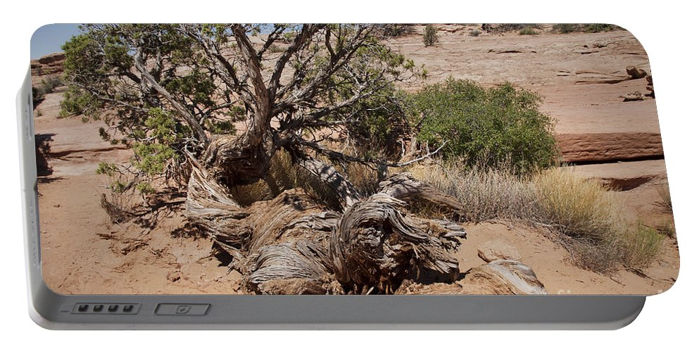 Tree Portable Battery Charger featuring the photograph Utah Tree by David Arment