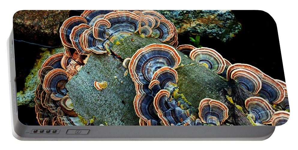 Wild Mushroom Portable Battery Charger featuring the photograph Velvet Wild Mushrooms by Jerry Cowart