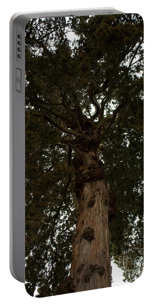Very Old Tree Portable Battery Charger featuring the photograph Venerable Elder by Kitrina Arbuckle