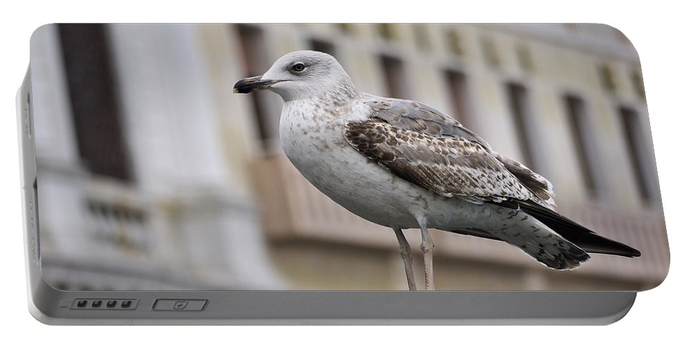Lagoon Portable Battery Charger featuring the photograph Venice Seagull by Ivan Slosar
