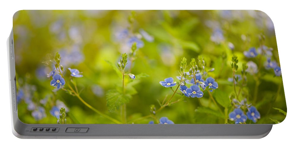 Abloom Portable Battery Charger featuring the photograph Veronica Chamaedrys Named Speedwell Or Gypsyweed by Arletta Cwalina