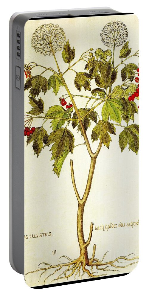 Viburnum Portable Battery Charger featuring the drawing Viburnum Opulus by Rose Santuci-Sofranko