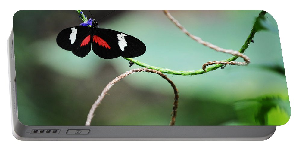 Butterfly Portable Battery Charger featuring the photograph Vine Hanger by Linda Kerkau