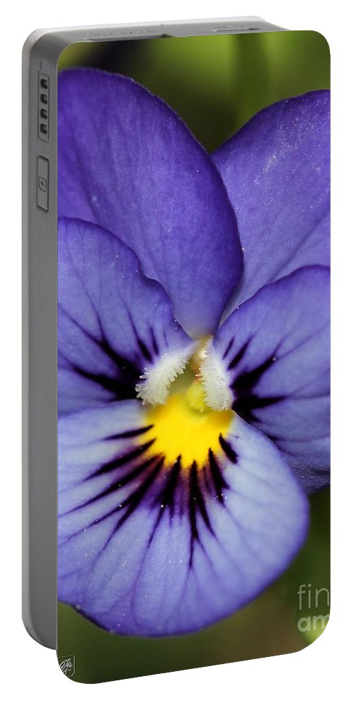 Mccombie Portable Battery Charger featuring the photograph Viola Named Sorbet Blue Heaven Jump-up by J McCombie