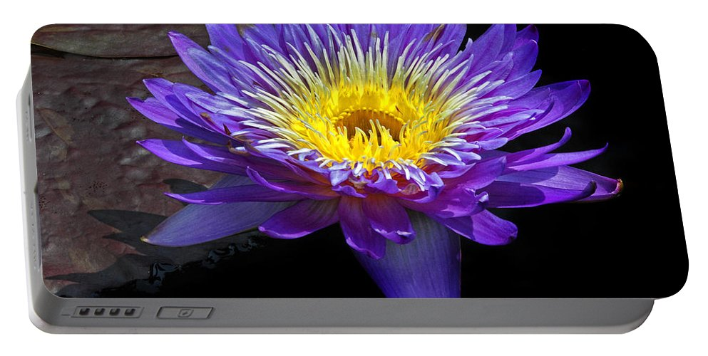 Waterlily Portable Battery Charger featuring the photograph Violet Waterlily by Dave Mills