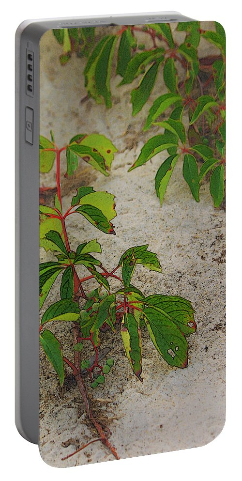 Beach Portable Battery Charger featuring the digital art Virginia Creeper At The Beach by William Sargent