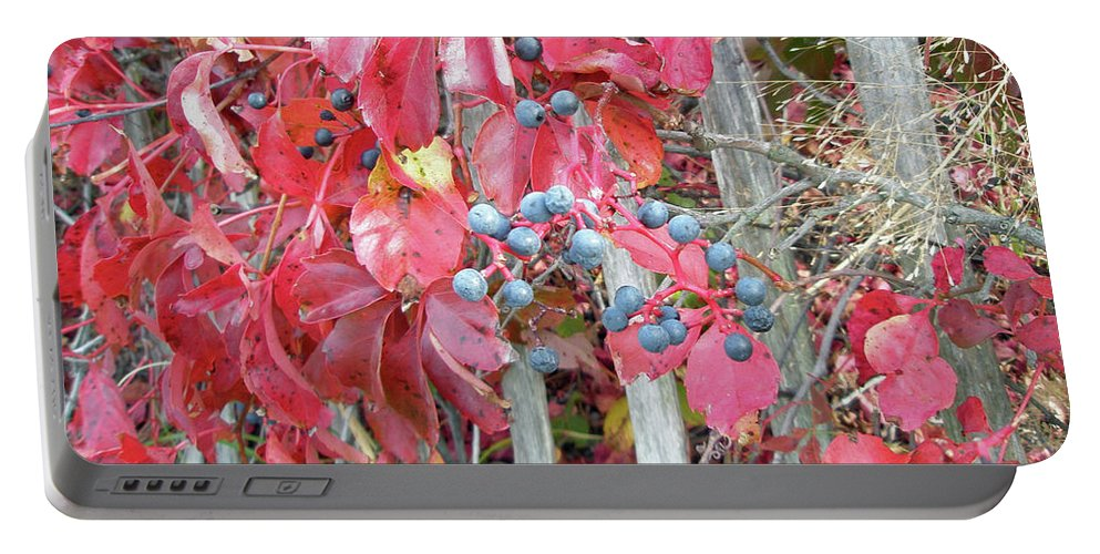 Foliage Portable Battery Charger featuring the photograph Virginia Creeper Fall Leaves And Berries by Mother Nature