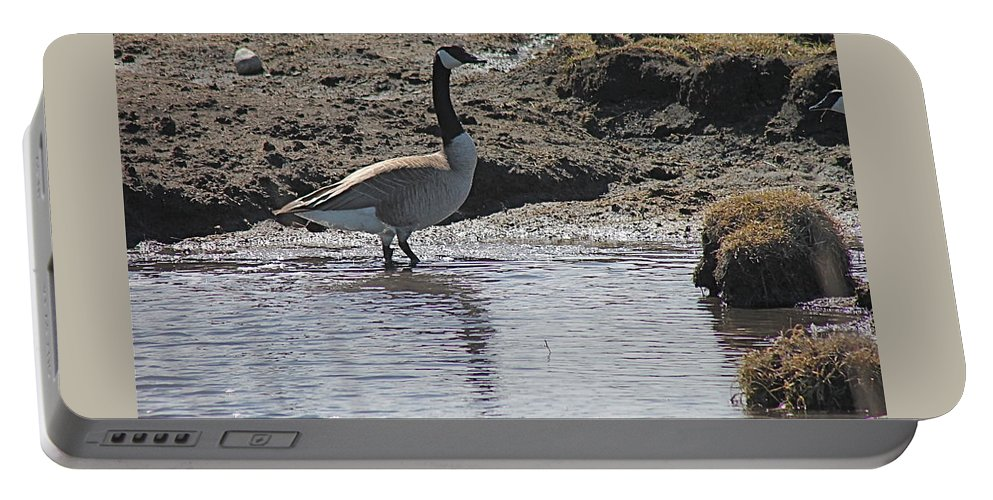 Birds Portable Battery Charger featuring the photograph Wading Goose by Wayne Williams