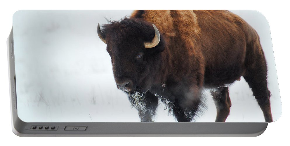 Buffalo Portable Battery Charger featuring the photograph Waiting For Spring by Jim Garrison