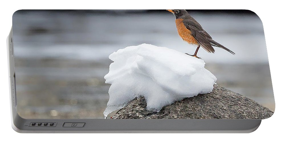 Robin Portable Battery Charger featuring the photograph Waiting For Spring Square by Bill Wakeley