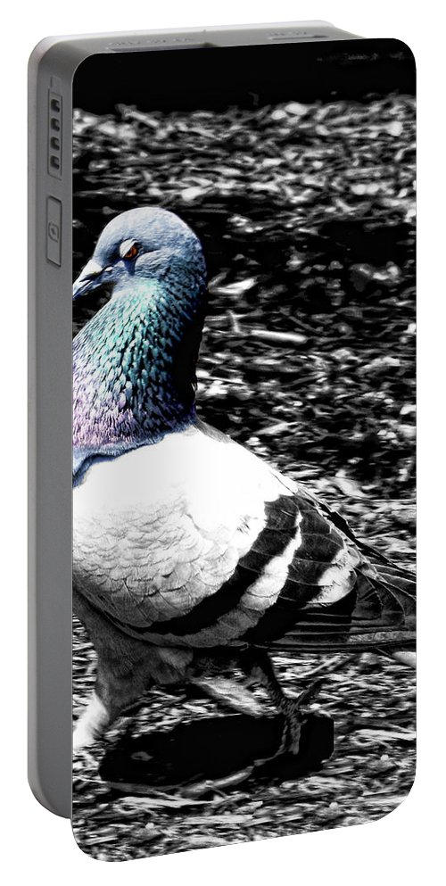 Pigeon Portable Battery Charger featuring the photograph Walking Pretty by Kristie Bonnewell