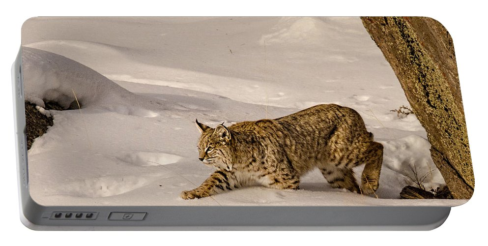 Bobcat Portable Battery Charger featuring the photograph Walking Softly by Priscilla Burgers